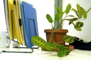 Trang trí cây xanh nơi làm việc giúp tăng tài lộc